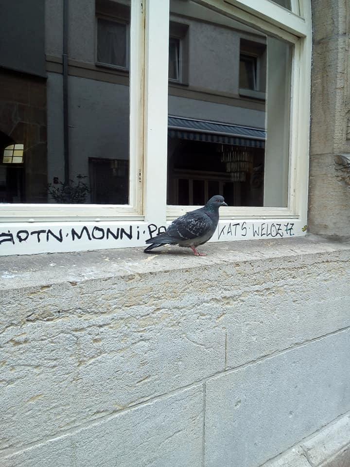 Taube vor Fenster